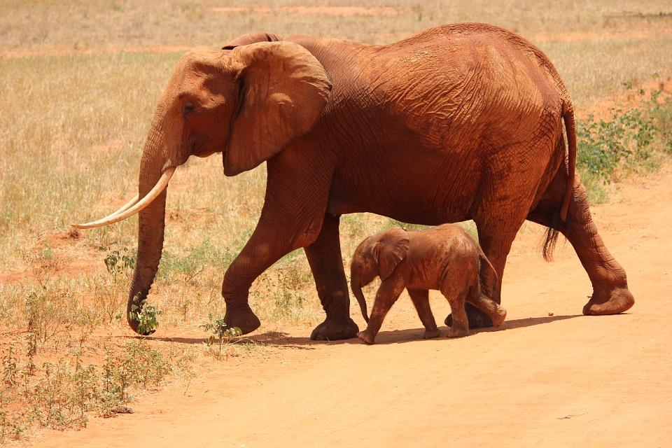 """Lutar contra o comércio ilegal da fauna e da flora selvagens é o tema do próximoc. A União Europeia enfrenta este desafio de nível mundial, através de """"um plano de ação para os próximoscinco anos…"""""""