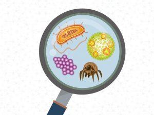 Microrganismos no ar