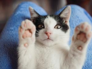 Alergia a animais de estimação: Como lidar com isso?