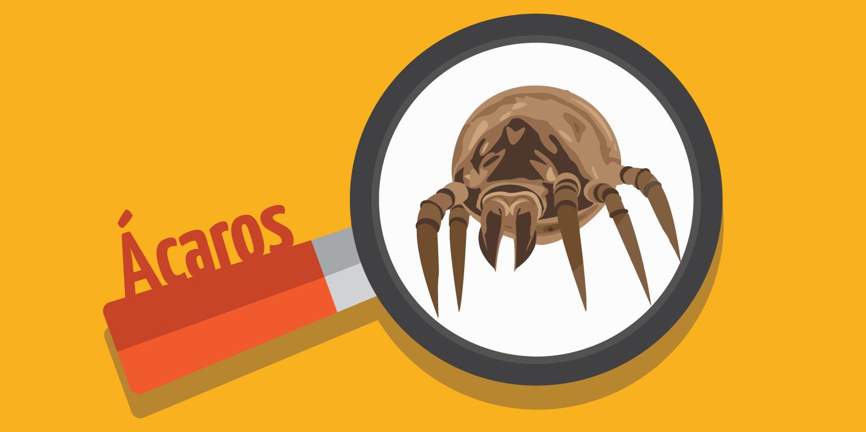 Por serem muito pequenos e invisíveis ao olho humano, os ácaros passam a maior parte do tempo despercebidos por nós.