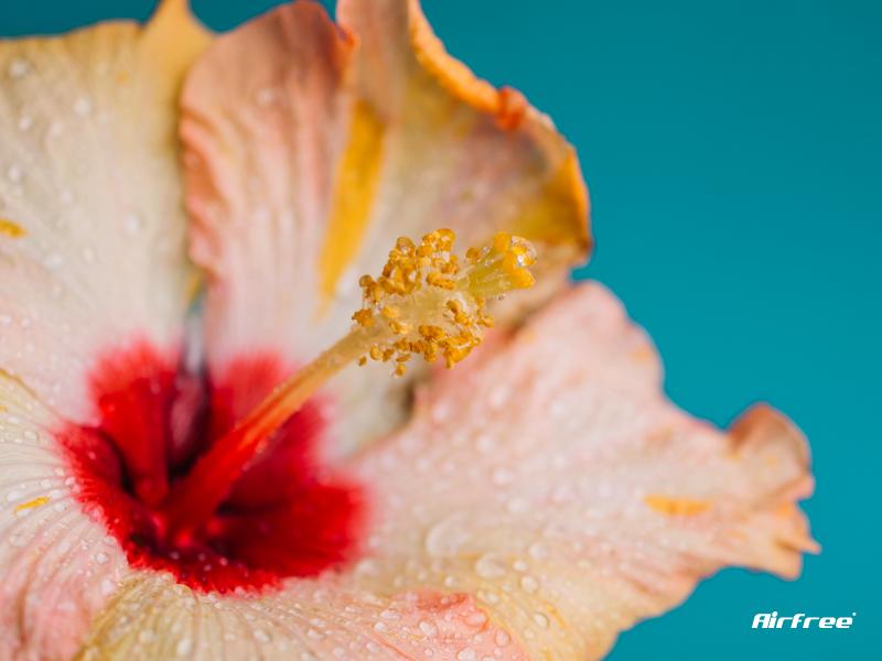 flor com pólen