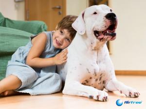 Como lidar com a alergia a pelo de animais dentro de casa?